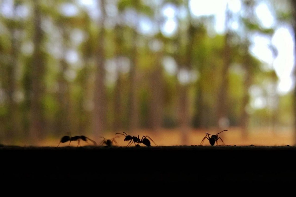gallery/ants-752032_1920