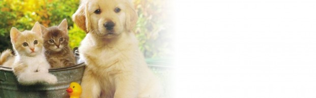 gallery/upload-blog-banner-p3