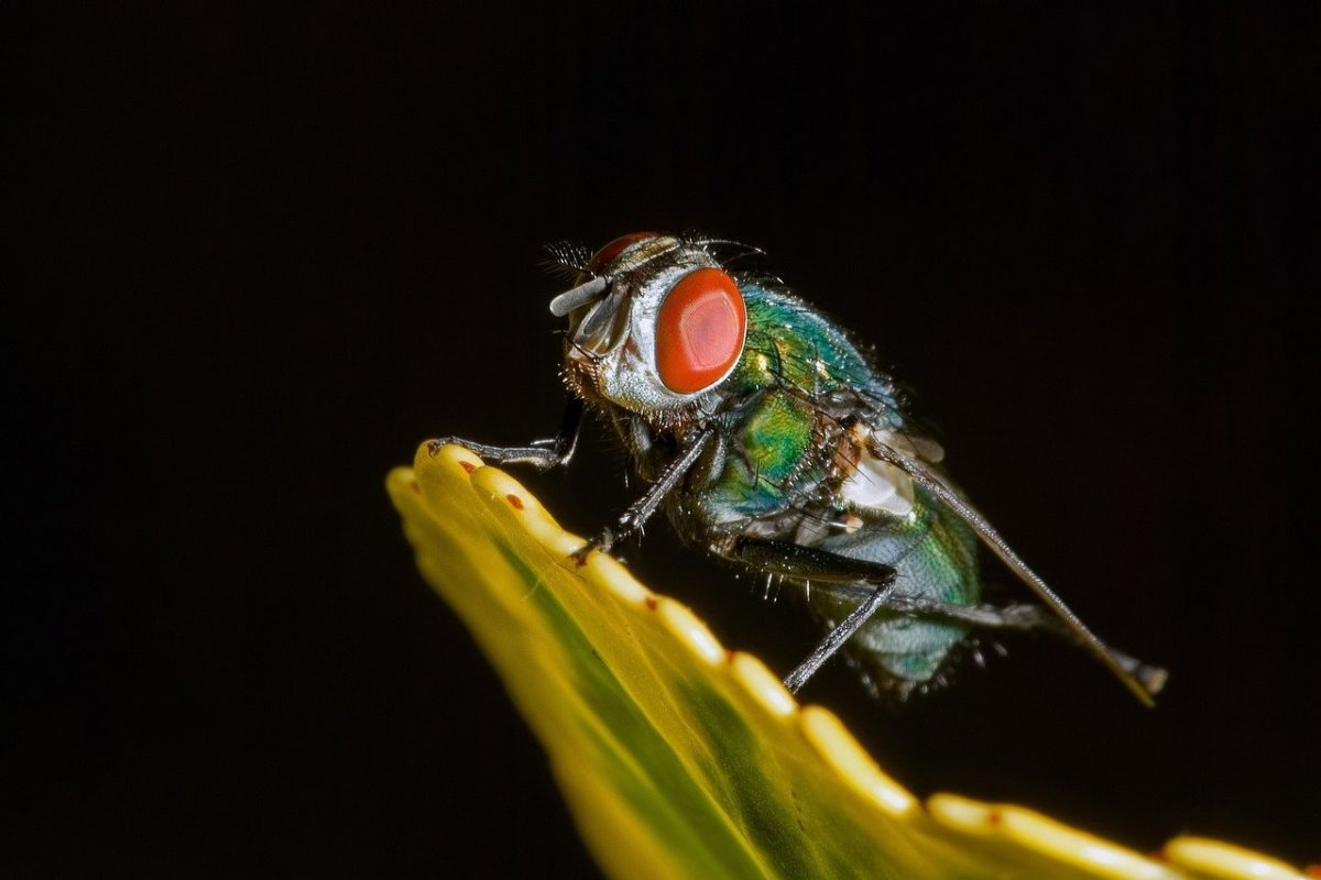 gallery/fly-insect-5087569_1280